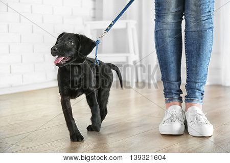 Cute Labrador puppy with owner