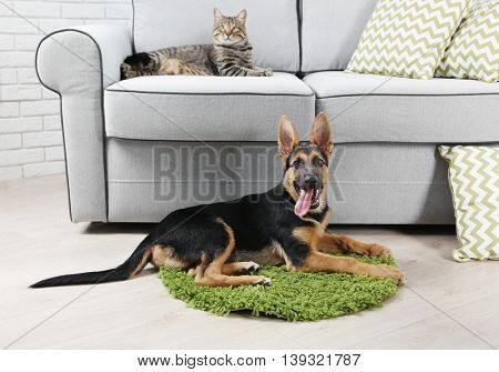 Cute cat and funny dog at home