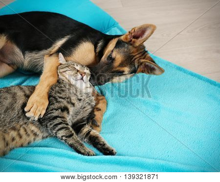 Cute cat and funny dog on blue plaid