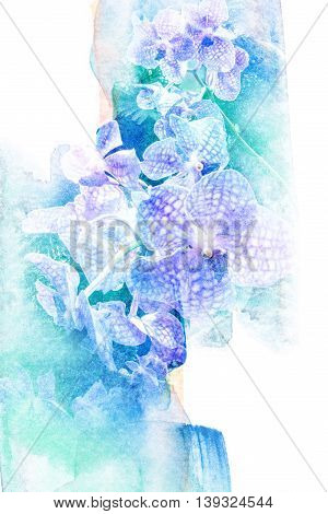 Abstract watercolor illustration of blossom orchid. Watercolor painting. Floral watercolor illustration.