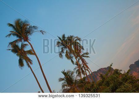 Palm Trees. Krabi, Ao Nang, Thailand.