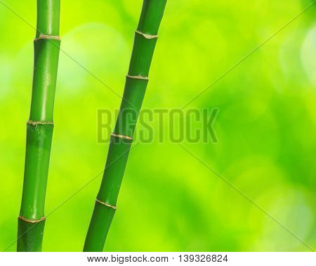 green bamboo isolated on a green background