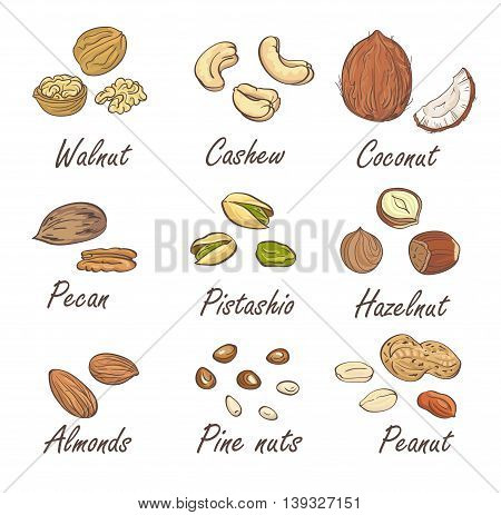Vector set of hand sketched nuts on white background in hand drawn style: hazelnut, almonds, peanuts, walnut, cashew, pine nut, pistachios, coconut, pecan