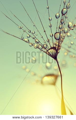 Dew drops on a dandelion seed at sunrise close up.