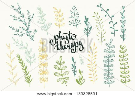 Set of vector herbs. Phytotherapy background. Stylish lettering