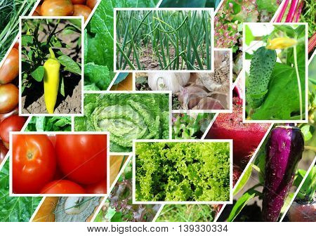 Collage on the theme of vegetables. Healthy food.