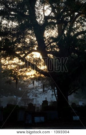 Early Morning In The Cemetery