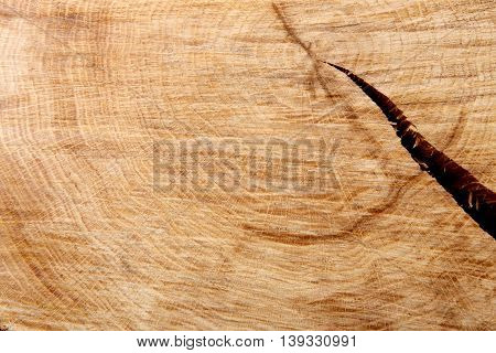 Light brown natural wood texture closeup with split crack. Wooden background. Hardwood surface circle, wooden disc cut out