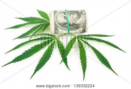 the cannabis and money