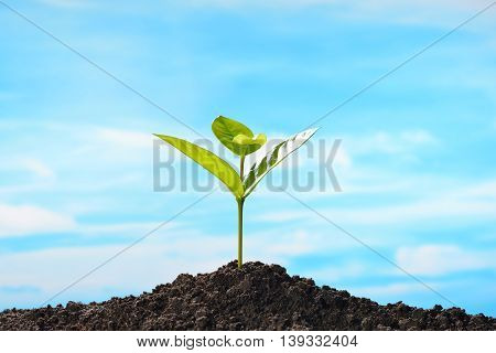 Green sprout growing out from soil on sky background