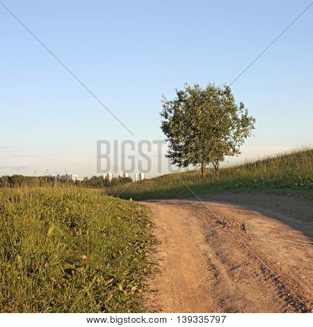 two green tree on a hill near a dirt road and construction of houses away.