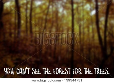 You can't see the forest for the trees