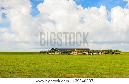 Modern farm located in a Dutch polder. It is a sunny summer day. The sky is blue with large cumulus clouds.