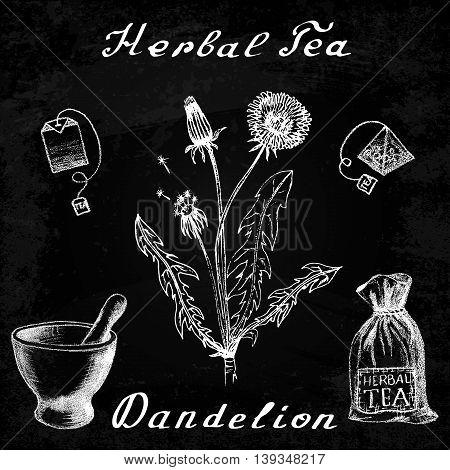 Dandelion hand drawn sketch botanical illustration. Vector drawing. Herbal tea elements - tea bag, bag, mortar and pestle. Medical herbs. Lettering in English languages. Effect chalk board