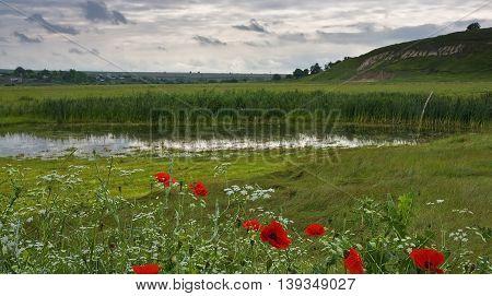 Swamp in a field near the hill. Poppy flowers.