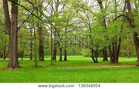 Green Park after a brief rain. Nature.