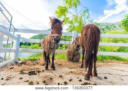 Funny Donkey Animal In Outdoor Farm
