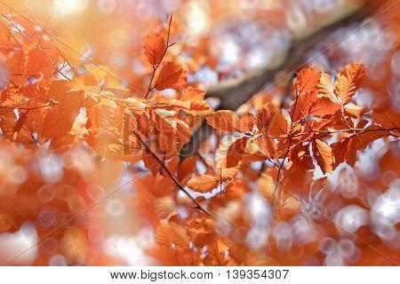 Sun's rays illuminate foliage on treetop, beautiful nature in autumn