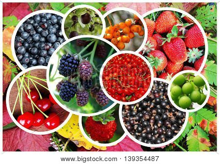 Collage on the theme of fruits and berries on a background of autumn leaves.