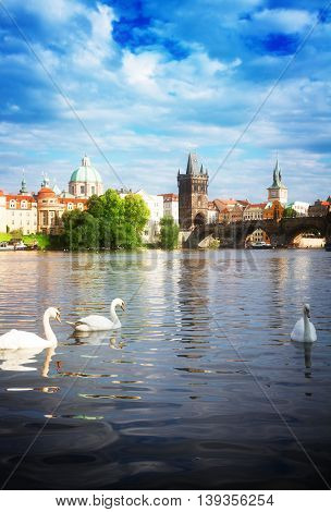 White swans with background of Charles bridge over river Vltava, Prague, Chech Republic toned