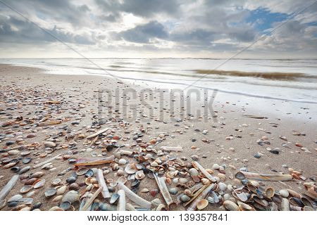 many shell on sand beath at low tide of North sea