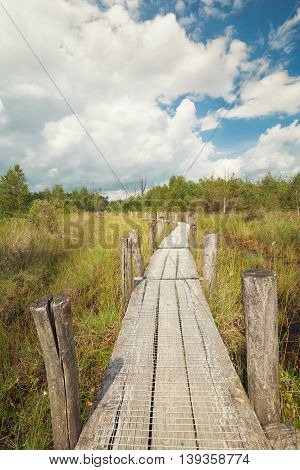 wooden path on marsh in summer, Netherlands