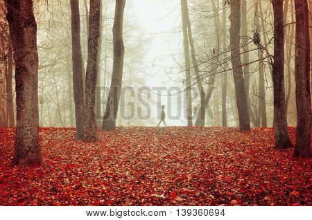 Autumn Park In Dense Fog With Ghostly Silhouette- Autumn Landscape With Autumn Trees And Red Dry Fal