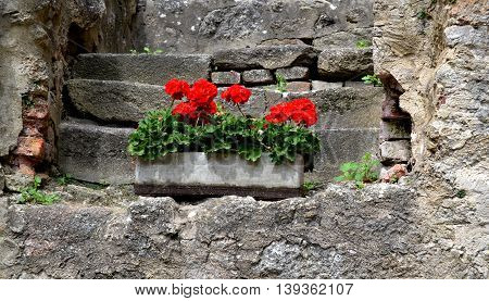 Planter box with red geraniums on the castle built of stone stairs.