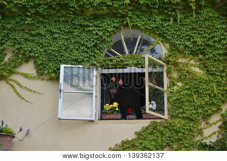 Around the windows in one of the Baroque gardens in Prague, climbs across the walls beautifully green ivy.