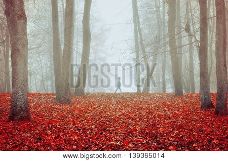 Autumn nature -foggy autumn view of autumn park in dense fog with ghostly silhouette- autumn landscape with autumn trees and red fallen leaves. Soft focus applied.