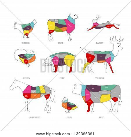 Butcher shop concept vector illustration. Meat cuts. Animal parts diagram of pork, beef, lamb.
