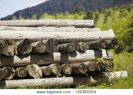 Piles of wood on the sunny day in the mountains