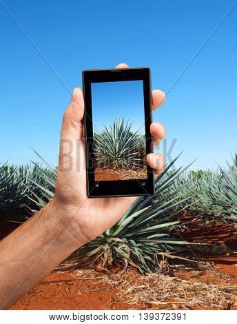 Hand taken photography with cellphoene to Agave tequila landscape to Guadalajara Jalisco Mexico.