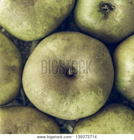 Apples Picture Vintage Desaturated