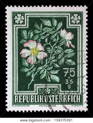 ZAGREB, CROATIA - JULY 03: stamp printed by Austria, shows Dog Rose (Rosa canina), circa 1948, on July 03, 2014, Zagreb, Croatia