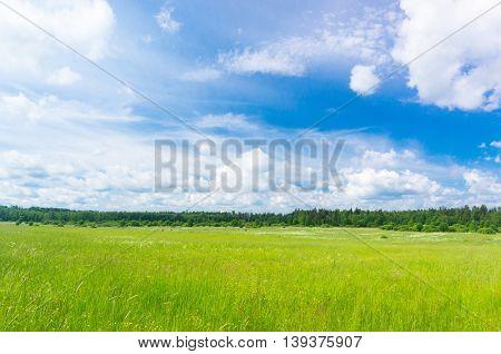 Growth Season Grass Lawn