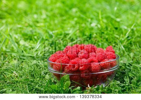 Bowl of freshly harvested raspberries on a grass in a summer garden
