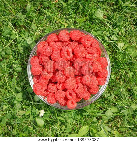 Top view of a bowl of freshly harvested raspberries on a grass in a summer garden toned