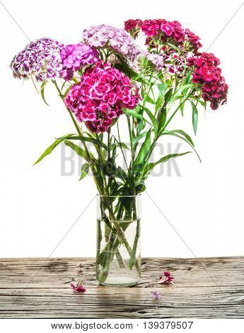 Dianthus barbatus. Flowers in the vase on the wooden table.