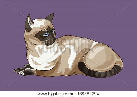 Isolated Thai cat on a purple background, vector illustration