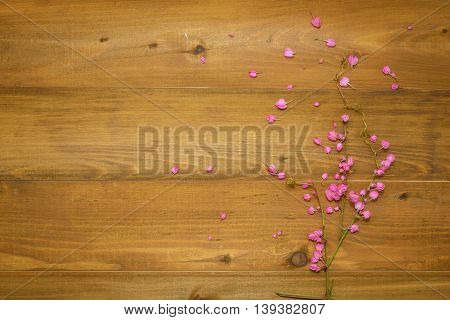 Beautiful pink flowers on brown wooden background or backdrop