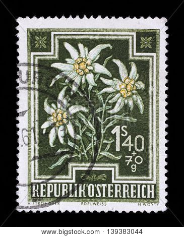 ZAGREB, CROATIA - JULY 03: stamp printed by Austria, shows Edelweiss (Leontopodium alpinum), circa 1948, on July 03, 2014, Zagreb, Croatia