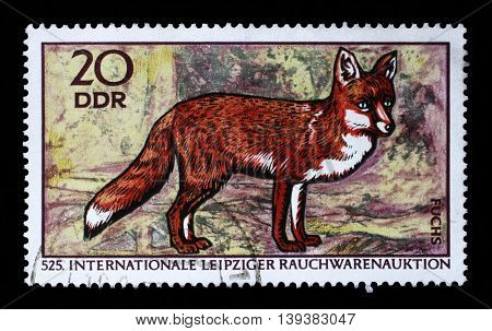 ZAGREB, CROATIA - JULY 03: a stamp printed in GDR shows Red Fox, Vulpes Vulpes, 525th International Fur Auctions, Leipzig, circa 1970, on July 03, 2014, Zagreb, Croatia