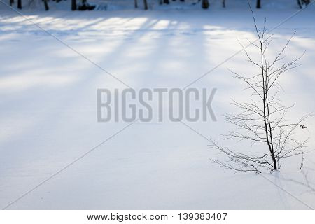 Small tree near frozen lake in snowdrift