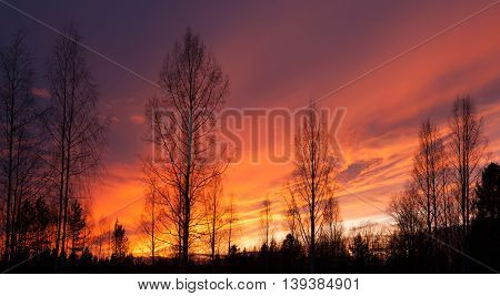 Fiery sunset and trees silhouettes nature landscape