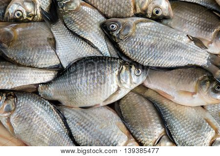 On a wooden table is a carp caught in the river lies next to green onions and dill.