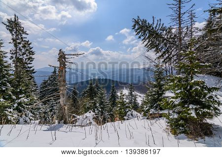 Panoramic Horizontal View With Snow Covered Trees. Landscape Of Snow-covered Trees On A Mountain Tra