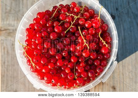 Red currents in bucket on wooden bench