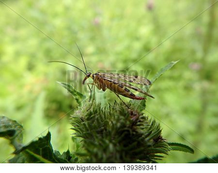 insect sitting on the grass,  insect on a green background