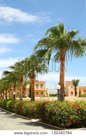 a palm trees in the resort near the sea